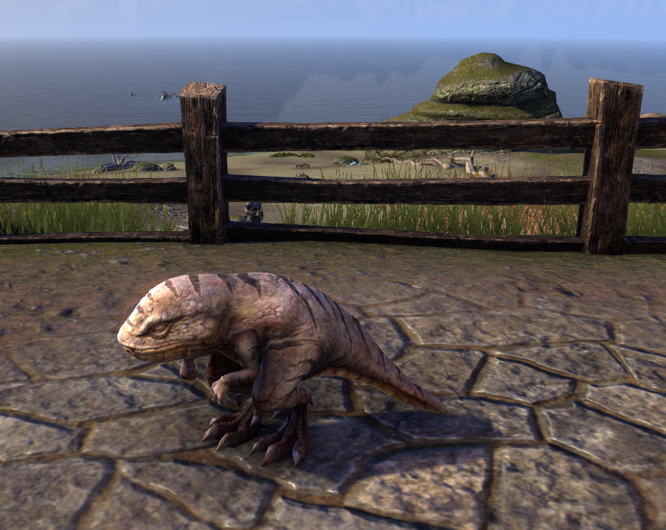 ESO Pet Guar at Beach