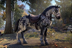 Crown Store Piebald Destrier